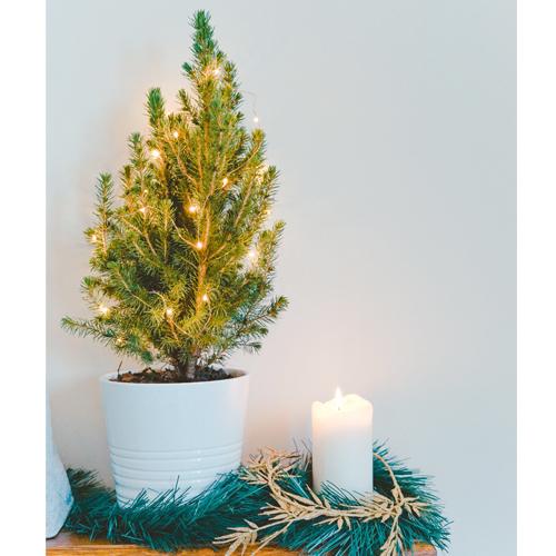 Homely Christmas Harmony